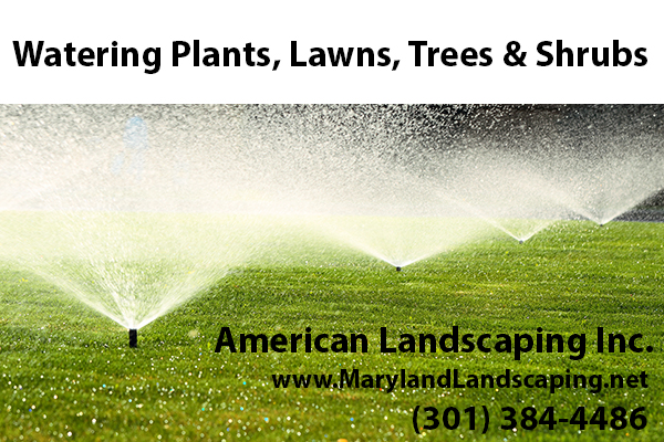 Watering Plants, Lawns, Tree & Shrubs