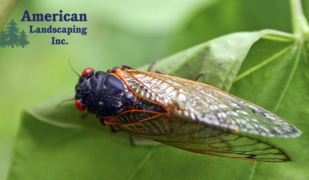 Get Ready the 17-year Cicadas Are Coming!